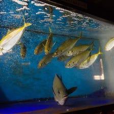 生簀からすくい上げる活魚を堪能!