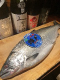 日本海 桜鱒(さくらます)