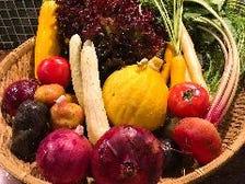 色鮮やかな鎌倉野菜