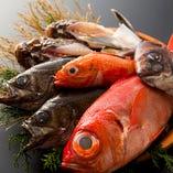 明石・瀬戸内の近海鮮魚【兵庫県】