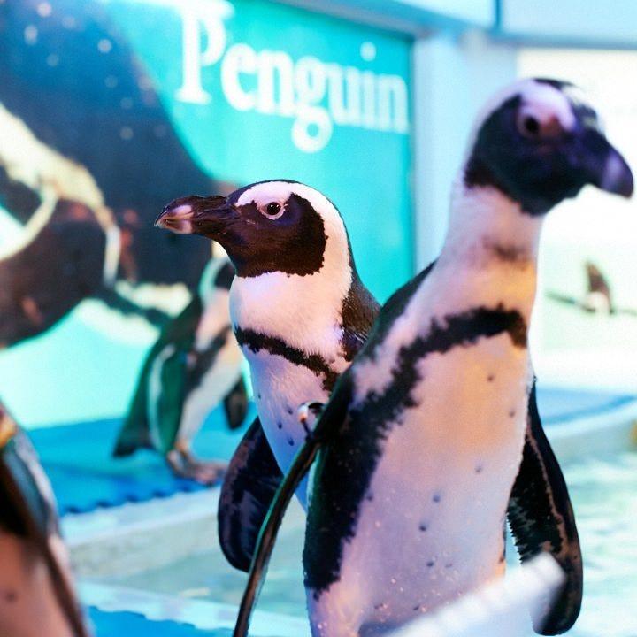 本物のペンギンがみなさまをお出迎え