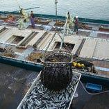 豊富な魚種が自慢の沼津港から自社便で最短直送!