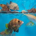 市場から直送の新鮮な海産物【福岡県】