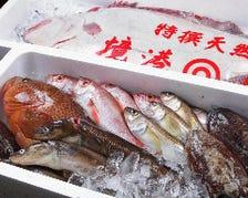 毎日届く!朝獲れたての鮮魚を堪能!