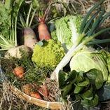 地元で採れた新鮮野菜をふんだんに使用しております。