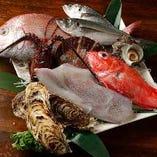 店主自ら毎朝松戸市場で仕入れる旬の新鮮魚介をご堪能ください!