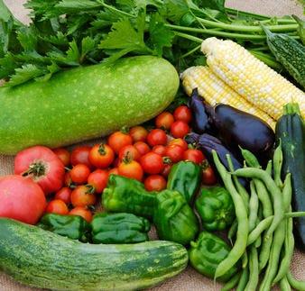 【仕入れ】四季を感じられる旬の食材