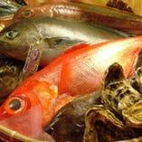 毎日新鮮なお魚を提供!!時期により仕入れ状況が変わります。