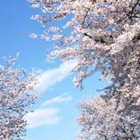 隅田川お花見プラン【3月・4月】