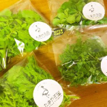 無農薬の有機野菜【静岡県西伊豆町】