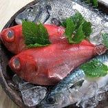 産地直送の鮮魚【愛媛県】