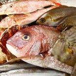 朝どれ地魚はいつでも大人気です!