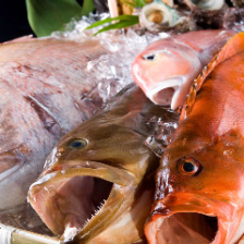 新鮮なお魚提供しております。