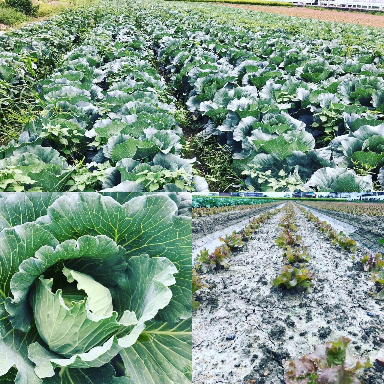 地元京都の農家から旬の野菜を