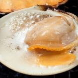 《活》白蛤(ホンビノス貝)の殻焼