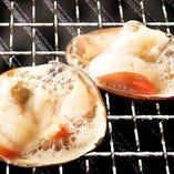 《活》ホッキ貝の殻焼