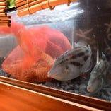 店内のいけすには、淡路島より届く活魚♪ 自慢の海鮮料理