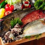 相模湾を中心とした魚介類【神奈川県相模湾】