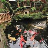 色とりどりの鯉が舞う池。見事な姿に目を奪われる