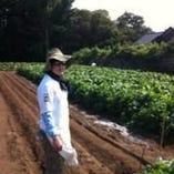 【新鮮、安全、安心】 野菜を総料理長自ら取ってきました!!