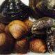 活あわびやホッキ貝など新鮮な貝類も入荷