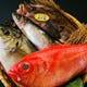 毎日、全国各地から鮮魚が入荷します