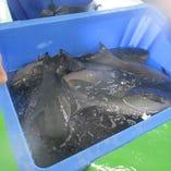 朝採れ鮮魚 自家製〆サバ