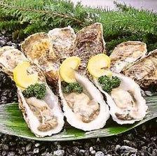 厚岸直送 殻牡蠣