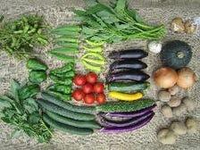 安心・安全の有機野菜