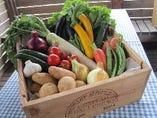 当店で扱う、新鮮な有機野菜!