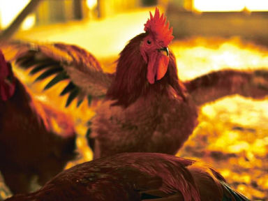 熊野地鶏 みえじん  メニューの画像
