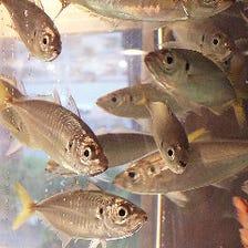 魚いっぱい◎店内水槽設置しました!