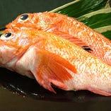 [築地で毎朝吟味厳選] 魚問屋の強み!一級品を正直価格でご提供