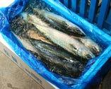 当社は、釣りにこだわる松輪漁港の認定業者第1号です!