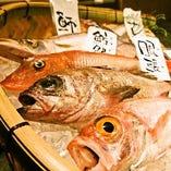 本日のオススメ鮮魚を、お客様のお席までお持ちいたします。