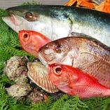 産地より直送の新鮮な鮮魚をお取り扱いしております。【千葉県など】