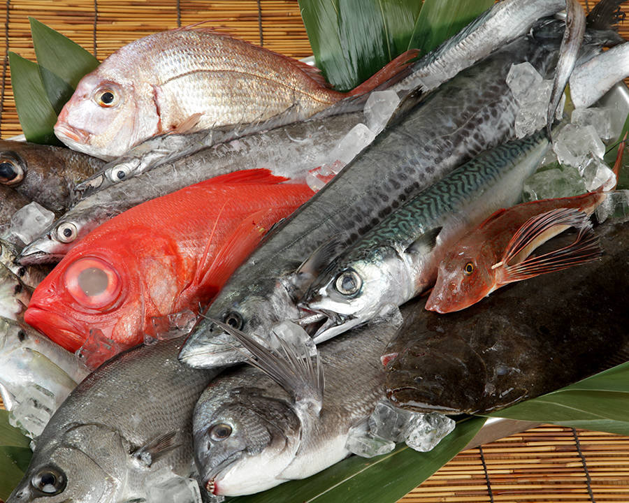 三崎漁港直送の新鮮な魚