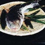 良質かつ、型の良い【天然】のみのふぐを使用しています。 年中いけすにふぐが泳いでいます。