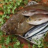 市場より直送の新鮮鮮魚。素材の味をご堪能ください。