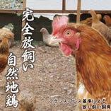 京都 亀岡 七谷地鶏【亀岡】