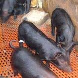 琉球まーさん豚『あぐー豚』【沖縄県名護市】