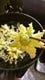 春の便り♪フキノトウ天ぷら。540円から