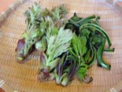 春先に地元で採れる山の恵みの山菜たち