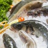 日本各地より直送鮮魚【日本各地】