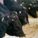 お客様にご提供する黒毛和牛を提携畜産牧場で育てております。