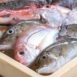 【北海道産】新鮮魚介-GYOKAI-【北海道】