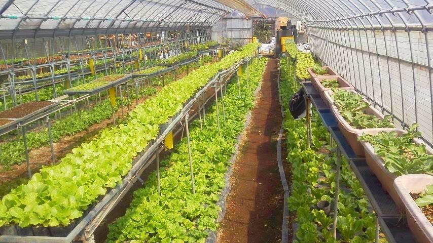 自家農園の野菜(有機肥料&低農薬)
