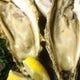 北海道の海の幸「牡蠣」お試しいただく価値あり!