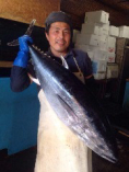 瀬戸内の天然鮮魚【広島県豊島】