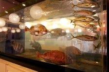 新鮮な活魚